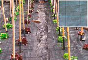 NBrand telo_paccia Telo Pacciamatura in PPL tessuto 100gmq Altezza 1.57 x 100 metri