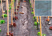 NBrand Telo Pacciamatura in PPL tessuto 100gmq Altezza 1.05 x 100 metri